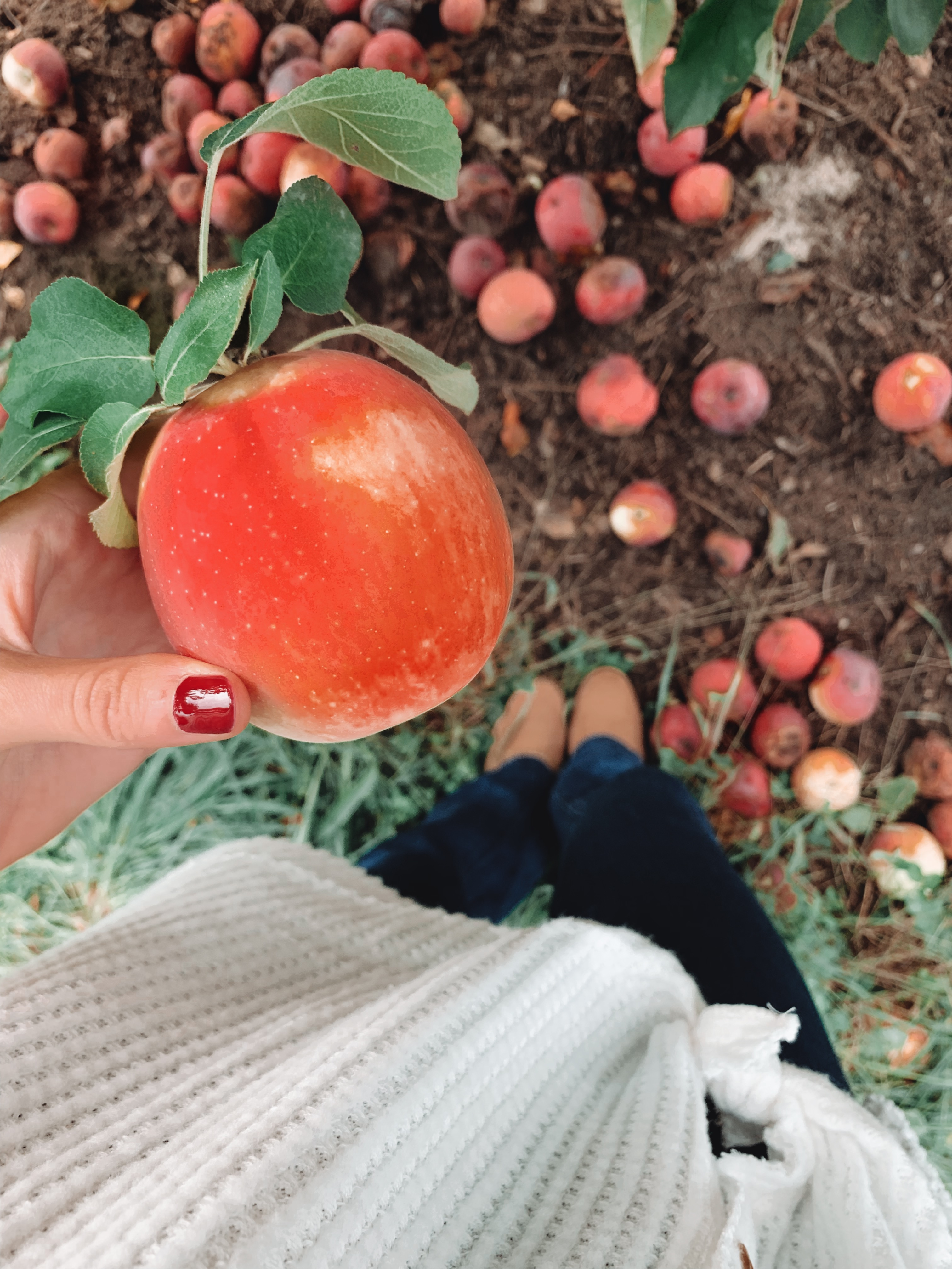 9 Places To Go Apple Picking In Rhode Island Rhode Island Monthly